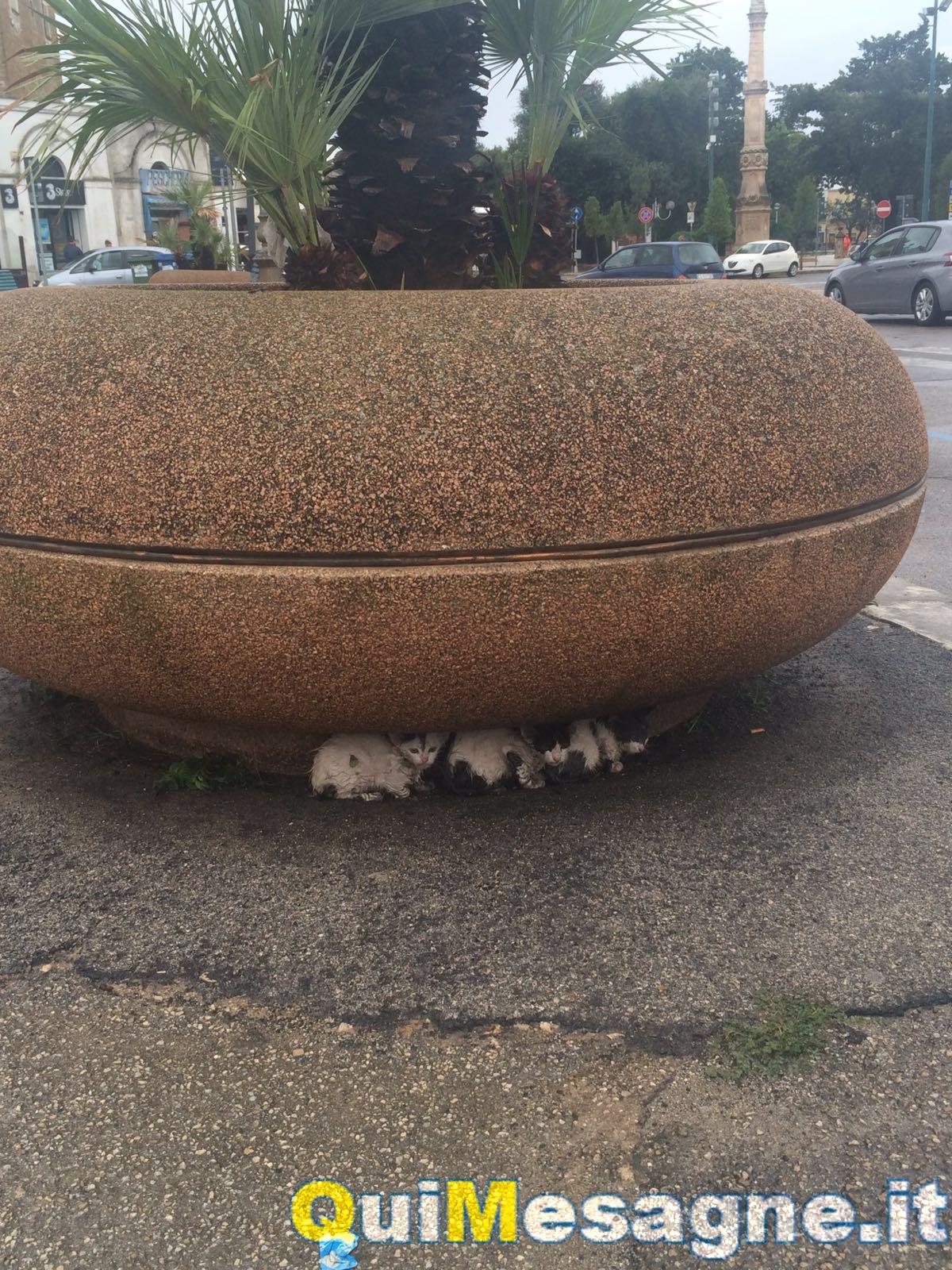 Abbandonati tre micetti sotto una fioriera di piazza Porta Grande