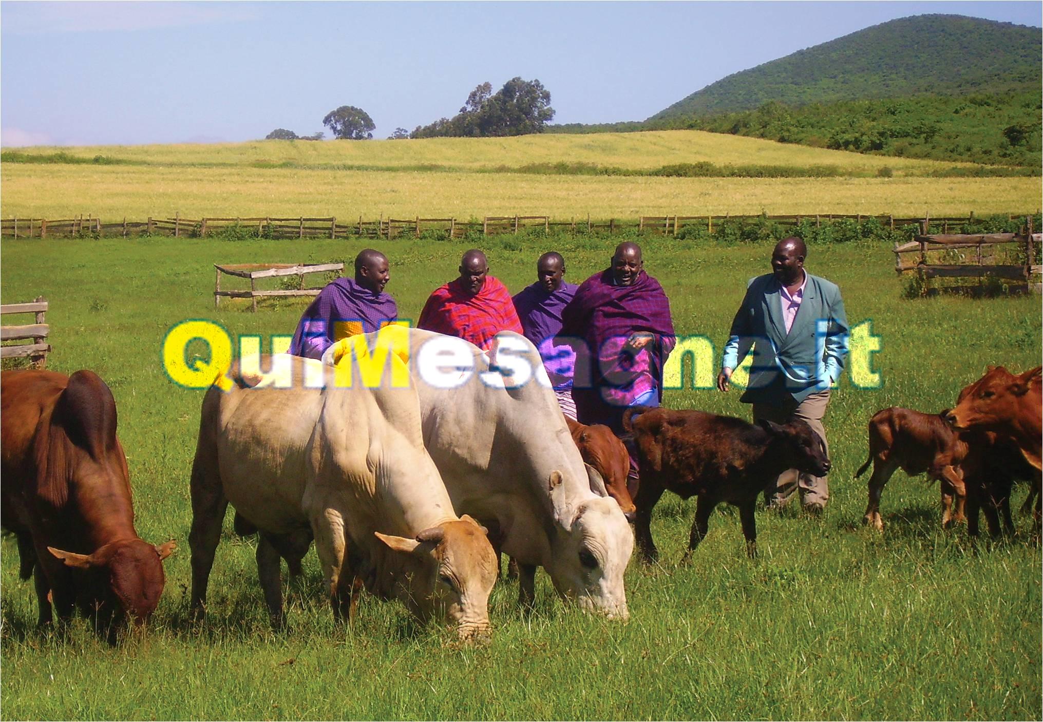 Una delegazione del Popolo Maasai a Mesagne domani 7 ottobre
