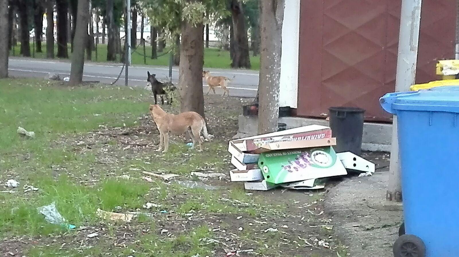 UFFICIO RECLAMI, cani randagi spaventano i cittadini