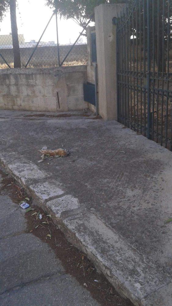 UFFICIO RECLAMI – Sono tre giorni che quel gattino è lì
