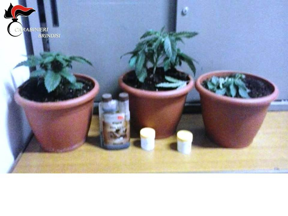 Mesagne, coltivava marijuana nei vasi. Arrestato 31enne