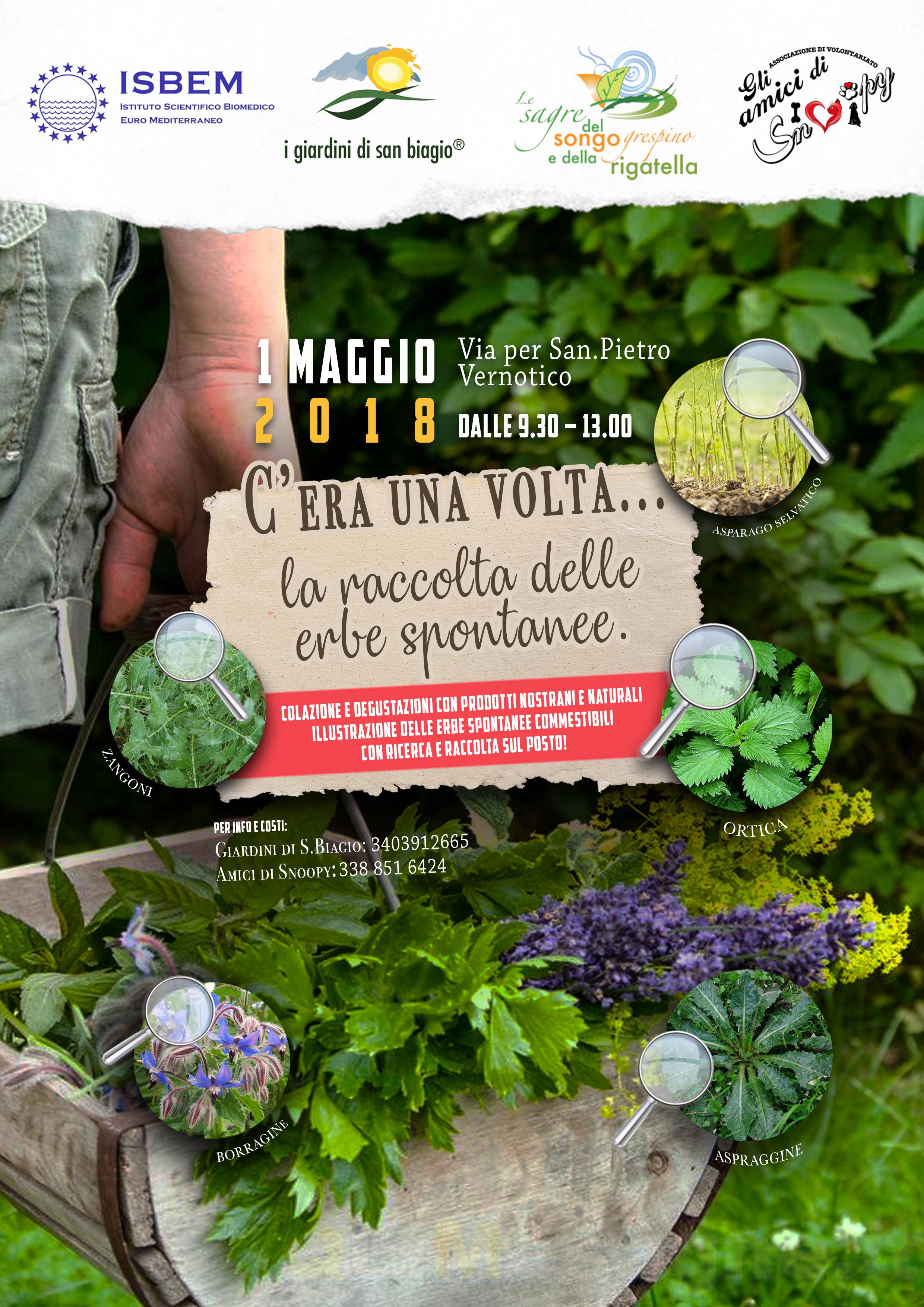 Il 1 Maggio appuntamento con la raccolta delle erbe spontanee