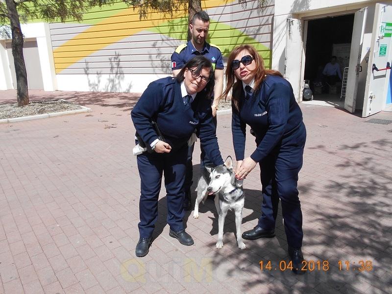 I Vigili e una volontaria salvano un cane dalla superstrada