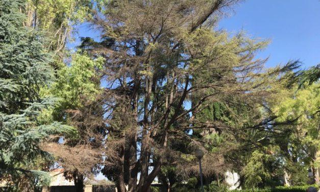 UFFICIO RECLAMI – Salviamo il nostro maestoso cedro del Libano