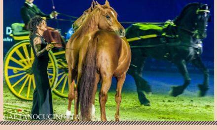 Martedì 7 Agosto ci sarà uno Spettacolo Equestre nel Rione Grutti