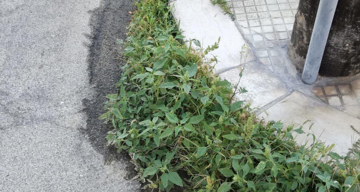 UFFICIO RECLAMI – In via Eschilo altra 'boscaglia' sui marciapiedi. Intervenite!
