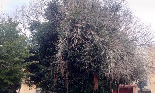 UFFICIO RECLAMI – Sfoltire l'albero di via Emilia