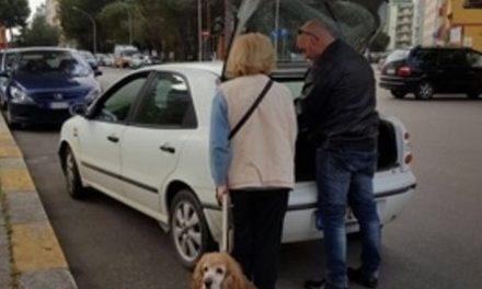 Brindisi, controlli della Polizia Locale sugli animali domestici