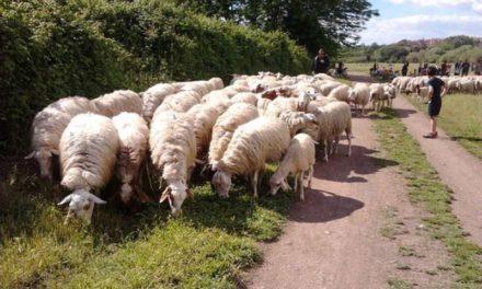 Mesagne, i NAS sequestrano una Masseria con tutti gli animali