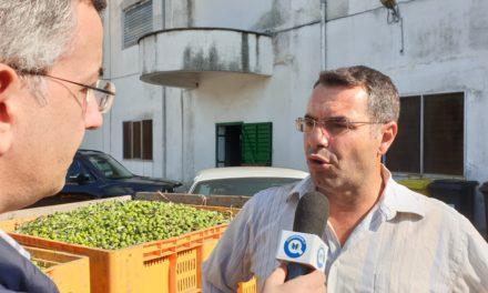 """Guarda il video """"Parte la campagna olivicola alla Cooperativa De Gasperi di Mesagne"""""""