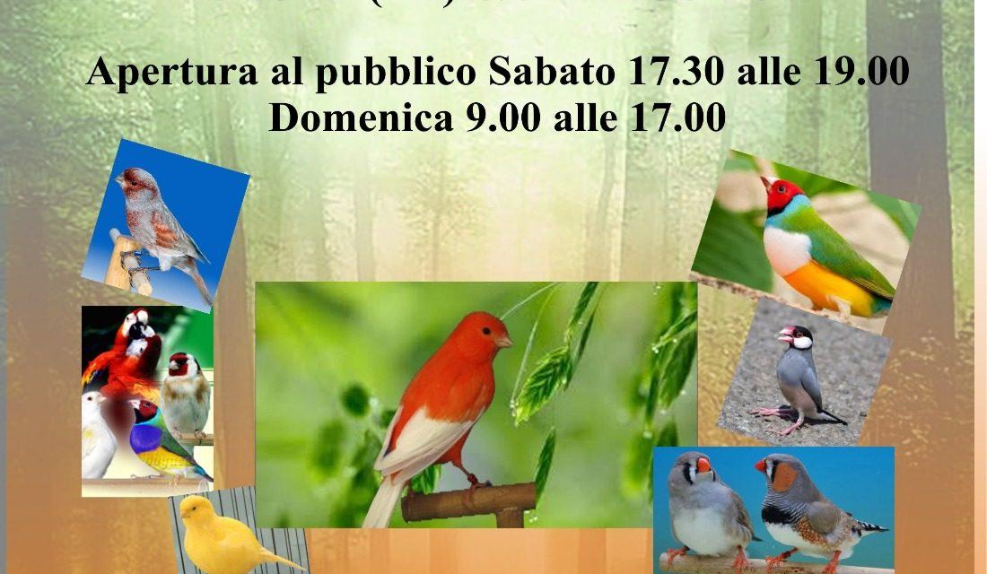 Mostra ornitologica nella sala di vetro di Parco Potì