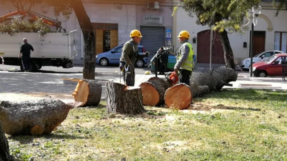 UFFICIO RECLAMI – Abbattuti due alberi di pino in villa comunale