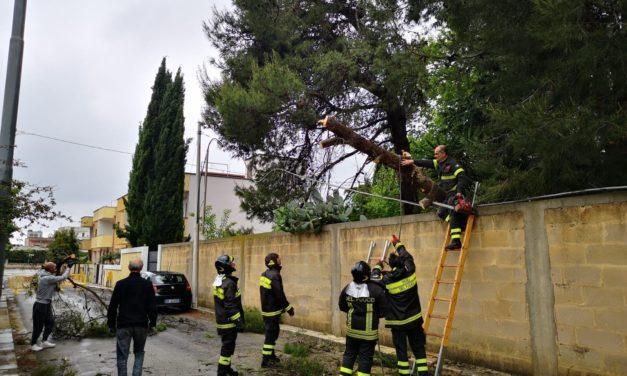 Disagi per la pioggia: spezzato un grosso ramo di pino e strada franata