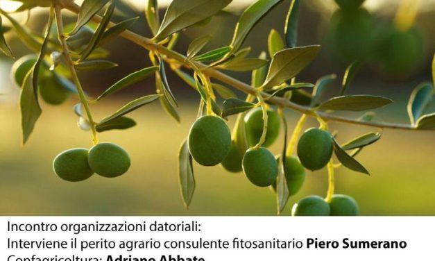 Agricoltura, Matarrelli incontra le organizzazioni datoriali